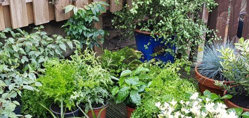 Scottish Wedding Prop Hire Plant Hire